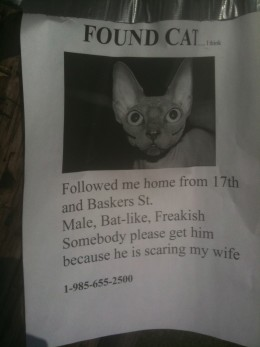 """Just a bit of humor in this """"found cat"""" flyer! Enjoy everyone!"""
