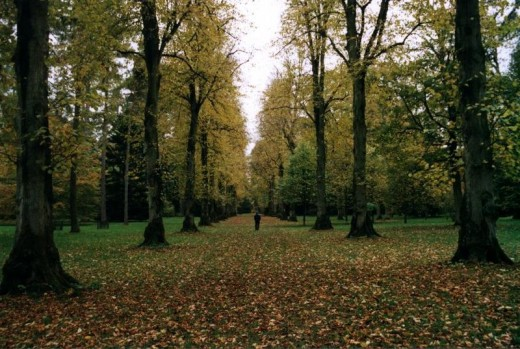 Westonbirt Arboretum - Avenue of trees. Author: Stuz, 2004.