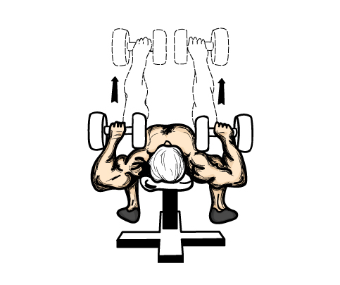 Both pectoral muscles are forced to balance the weight individually, ensuring that both sides are equally strong.