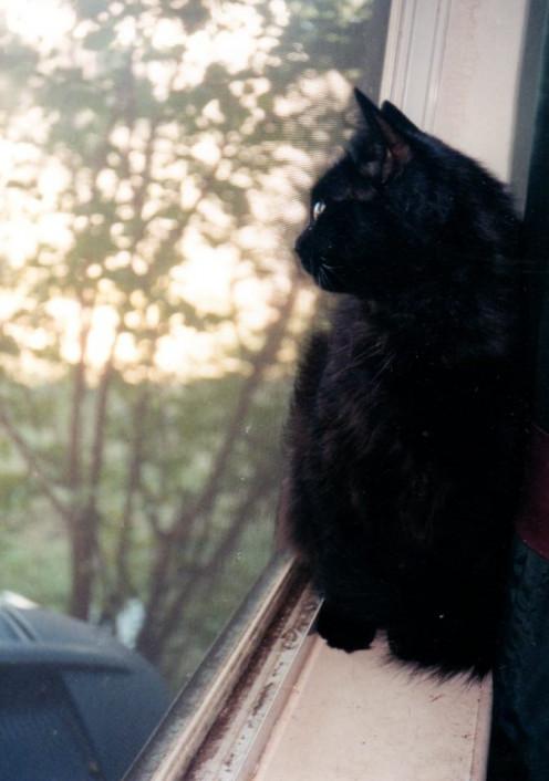 Blackette in the window.