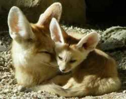 Writer Fox and Ima