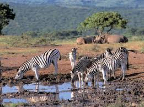 Wildlife of South African parks