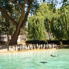 Penguin Beach at London Zoo