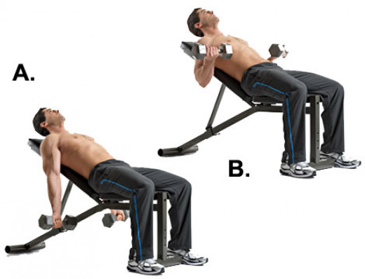 The biceps experience a great stretch at the bottom of the movement and are also completely extended, allowing for the largest possible range of motion.