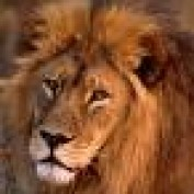 Friend Earner profile image