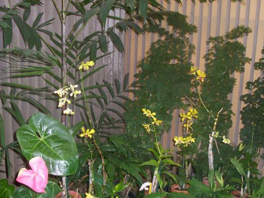 Orchids - Foster Botanical Garden