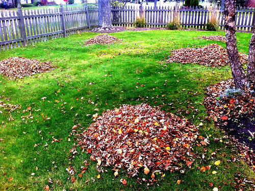 Piles of leaves by David Armano on Flickr