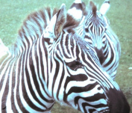 Holiday Activities for Children in Newquay: Newquay Zoo