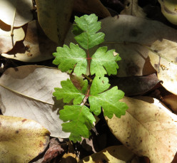 Learn How To Recognize Poison Oak