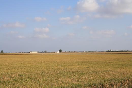 Rice Fields - L'Ampolla, Spain