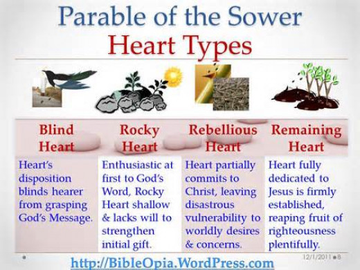 Heart Types and The Parable of the Sower | BibleOpia Blog