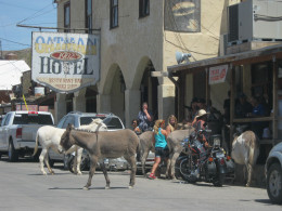 Burro's go anyplace they want in Oatman, and they HAVE been known to eat things like iPhones and cameras, so it is advised to HANG ON to these things!
