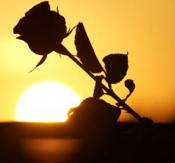 ~~~ Blossom ~~~