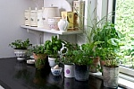 Grow the fresh herbs that you use most often