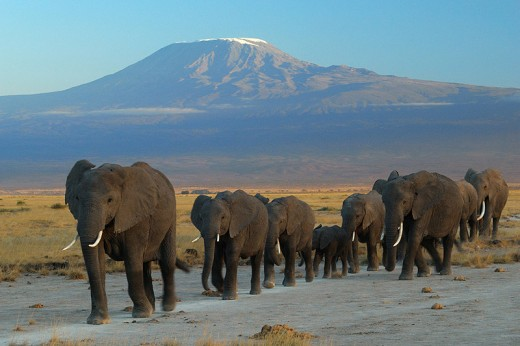 Amboseli National Park by Mount Kilaminjaro