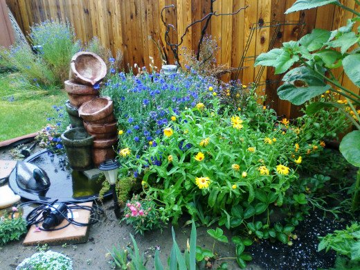 Flower garden in the rain. Blue bachelor buttons, yellow and orange calendulas, sunflower, fountain and pond.