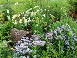 Easy Garden Landscaping Plants