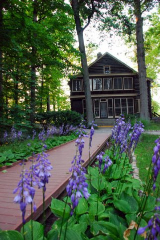 The Cabin in Wildflower Woods