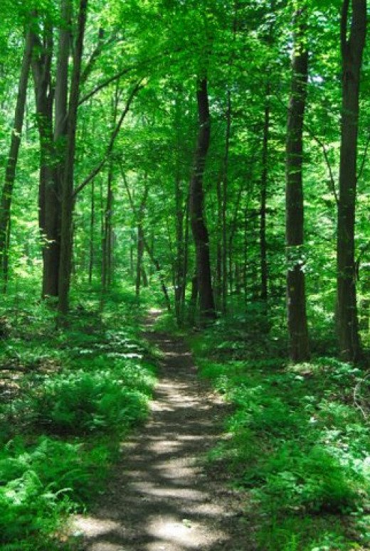 Nature walks are one of many ways to reduce stress