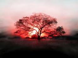 Underneath The Summer Tree Poem