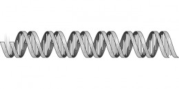 Simple image of DNA without epigenetic marks