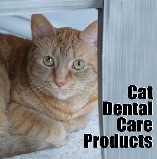 Cat dental care products make it easy to care for your cat's teeth at home.