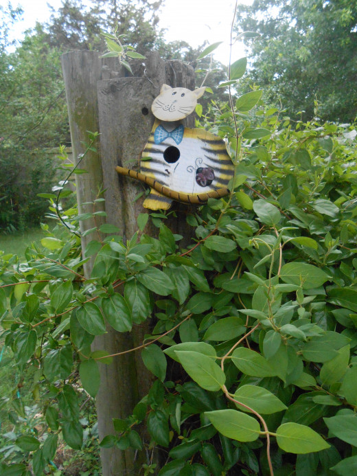 Cat bird house--think the birds will visit this one?