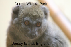 Glamping at Durrell Wildlife Park, Jersey Island, Channel Islands, England