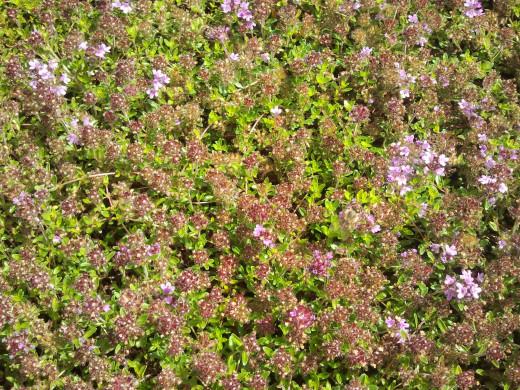 stone Wildflowers