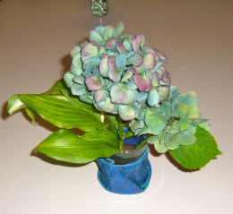 The blue ribbon 'round the small vase adds intensity to this light blue Hydrangea.