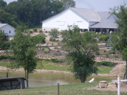 What's a great family fun spot in Ohio ? Walnut Creek Farm !
