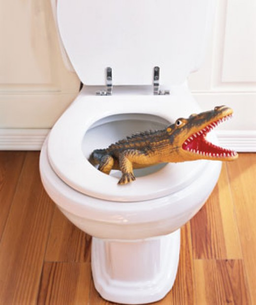Another danger of toilets... just kidding haha.