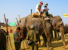Elephant Polo in Chitwan National Park