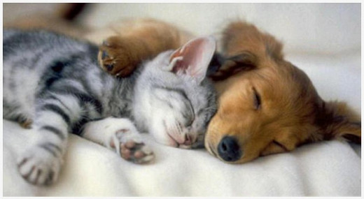 Where there's puppies hugging kittens, there's hope.