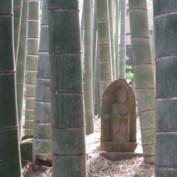 bambooyoga profile image