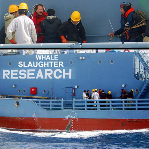 Hostage protestors aboard the whaling Japanese ship