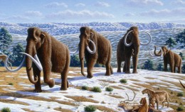 Could you imagine cloning the woolly mammoth and seeing them walk the vast icy plains on the northern reaches of the world's continents?