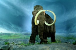 The beautiful Woolly Mammoth- an extinct creature that we hope to see come back to life one day. Will it happen???
