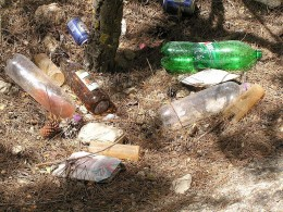 Garbage in pine forest