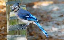 Birding and Birdwatching In Central Ohio