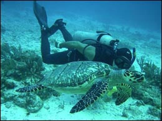 Yucatan scuba diving.