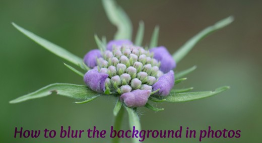 How to Take a Photo With a Blurred Background | FeltMagnet