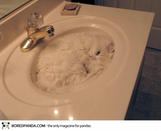 Cute and Cuddly Funny Cat in a Sink