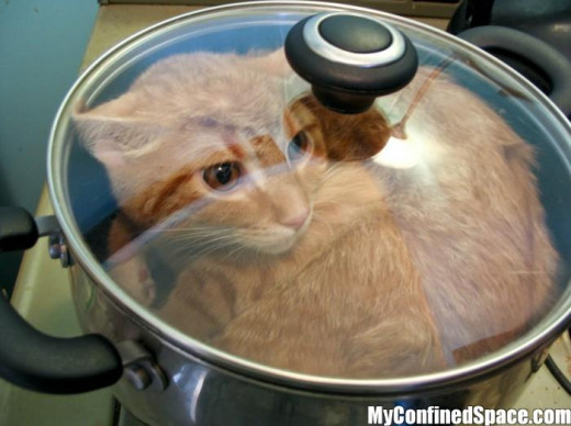 A Cat being Cooked- yum?