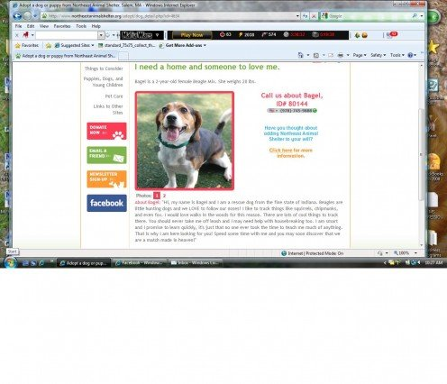 This is Bagel's pictures from the NEAS website.