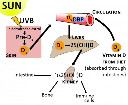 How we make vitamin D