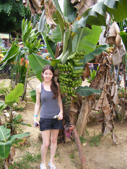 Finding the right excursion is an added bonus to any trip. We managed to find one that took us to several different locations, including a trip to a local school, where they grow their own bananas just outside their classroom window.