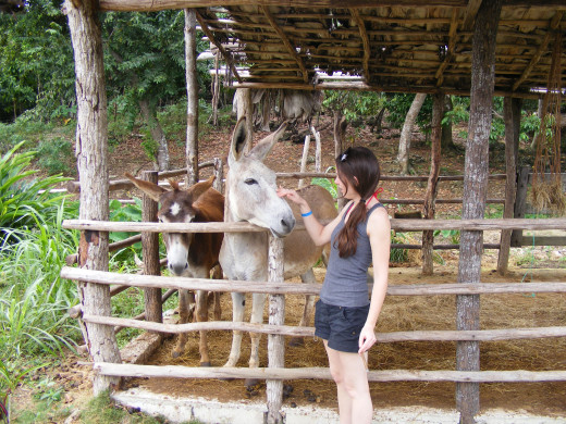 Getting acquainted with some of the animals at the coffee plantation.