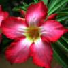 Sandytaylor443 profile image