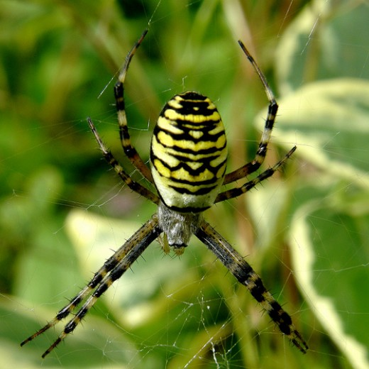 The Argiope spider also takes the shape of Saint Andrew's Cross.  (Surprisingly many spider superstitions say that spiders signify good luck.)